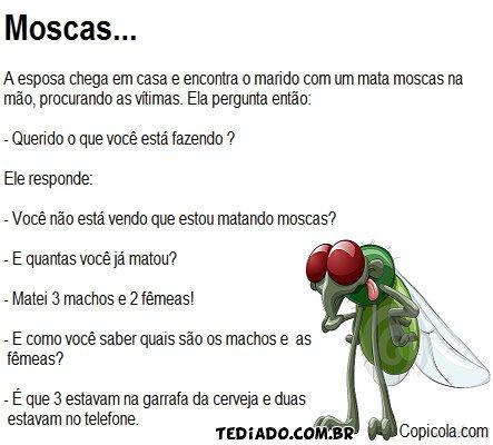 As moscas 4