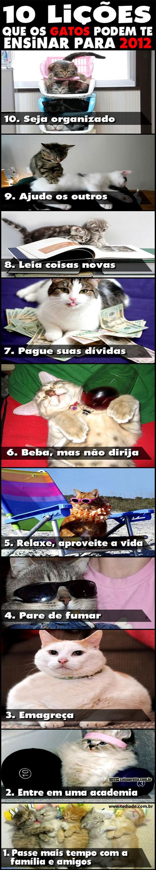 10 Lições que os Gatos podem te ensinar para 2012 4