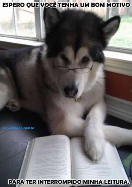 Atrapalhando a leitura do cão 2