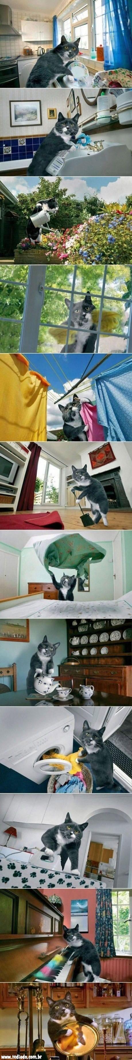 A vida de uma gata de família 4