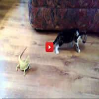 Susto épico do gatinho 9