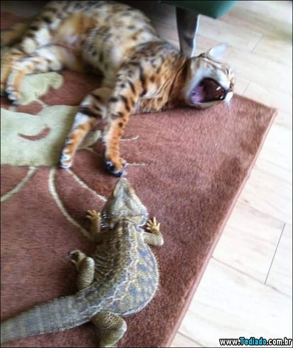animais_bonitos_01