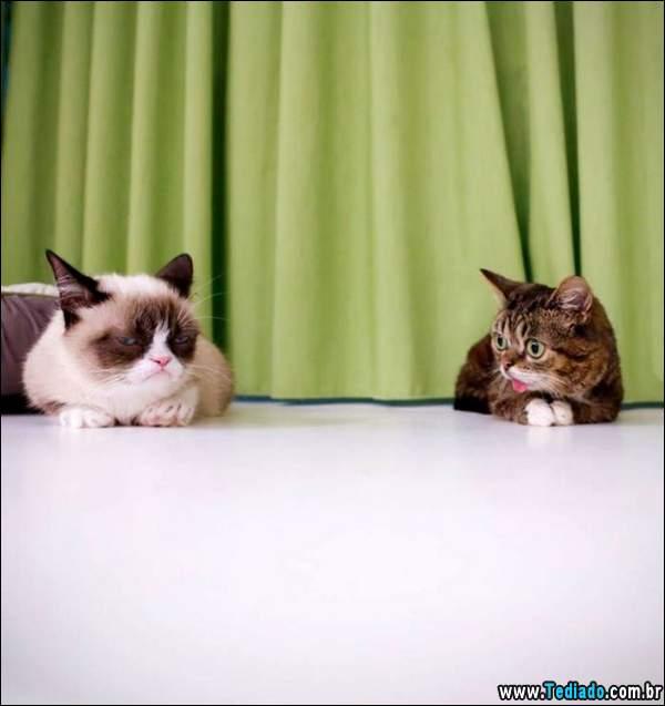animais_bonitos_02