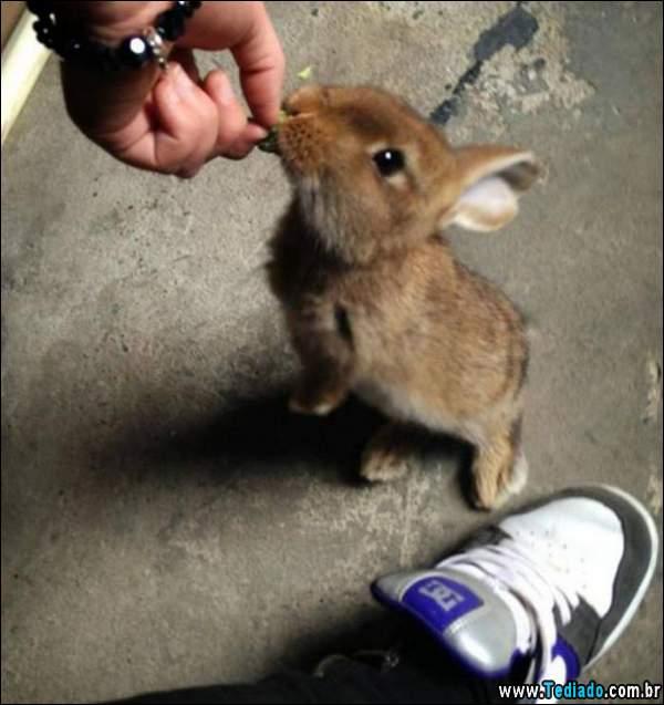 animais_bonitos_16