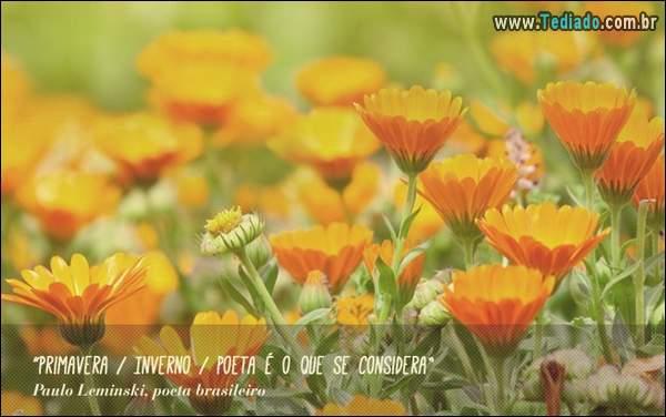 frases_primavera_22
