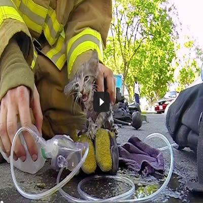 Bombeiro salvando um gatinho de um incêndio 6