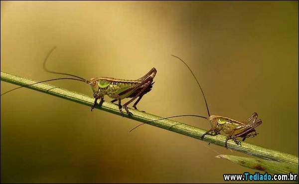 lindas_fotos_de_insetos_05