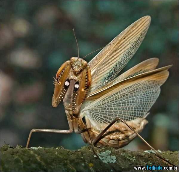 lindas_fotos_de_insetos_15