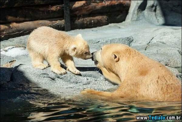 animais_bonitos_04