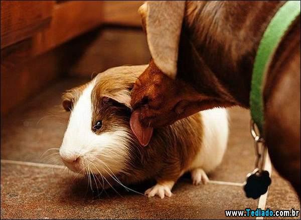 animais_bonitos_10