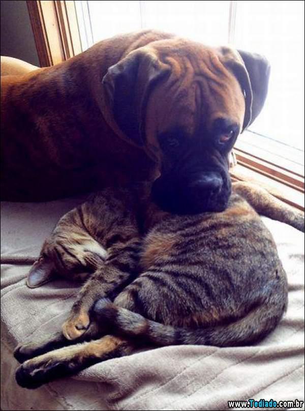 animais_bonitos_21