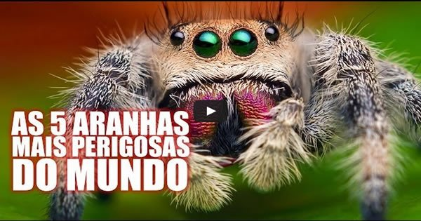 As 5 aranhas mais venenosas do mundo