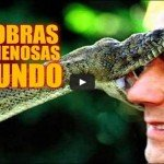 As 5 cobras mais venenosas do mundo