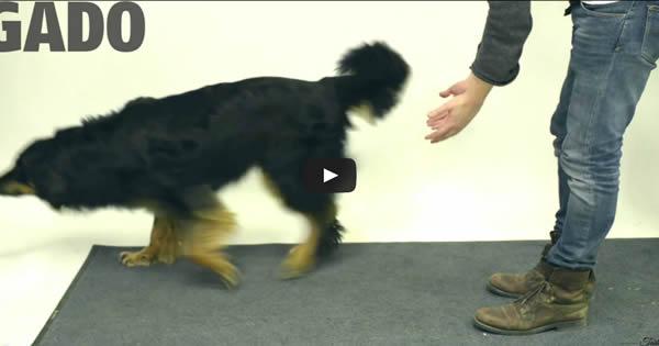 Veja a reação hilária dos cachorros ao ver seu petisco sumir da sua frente truque de mágica 1