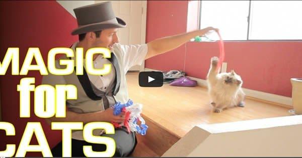 Como os gatos reagem a mágica 1