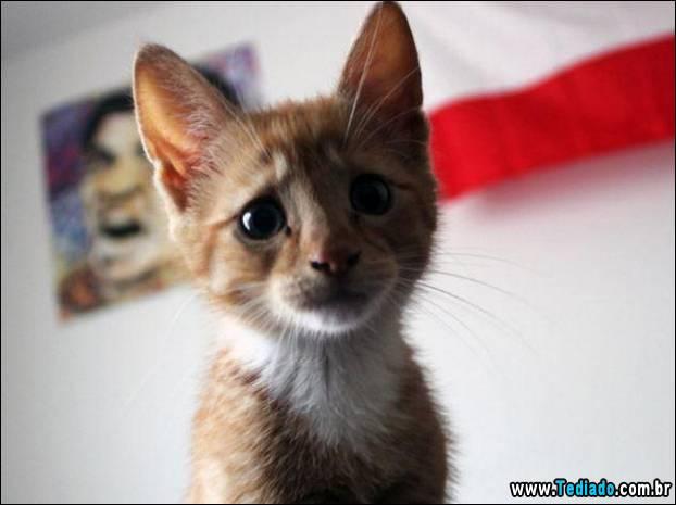 gato_02