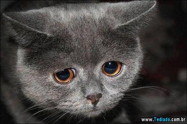 Картинки глазки грустные