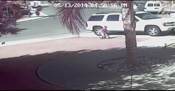 Cachorro feroz ataca uma criança de 4 anos e é salvo pelo seu gato 1