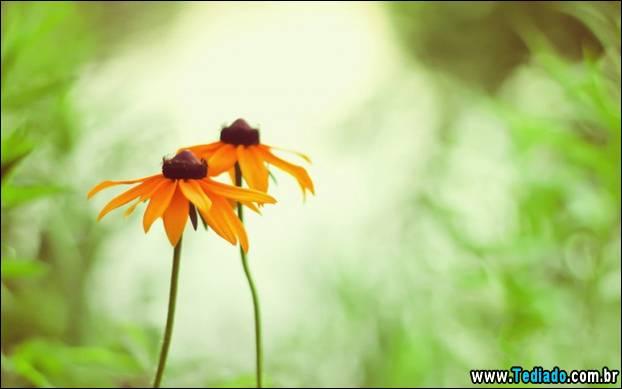fotos_legais_11