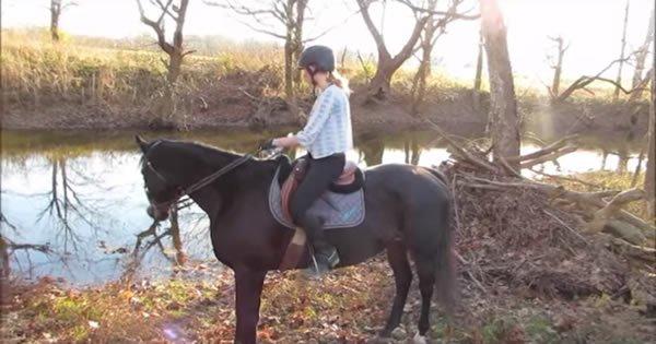 A vingança de um cavalo com sua dono 13