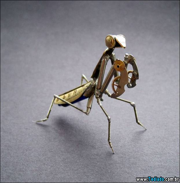 insetos-relogios-10
