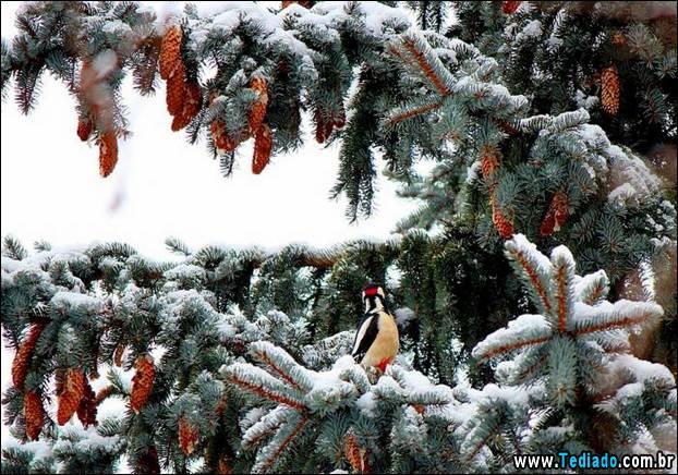 fotos-impressionantes-da-natureza-do-inverno-02
