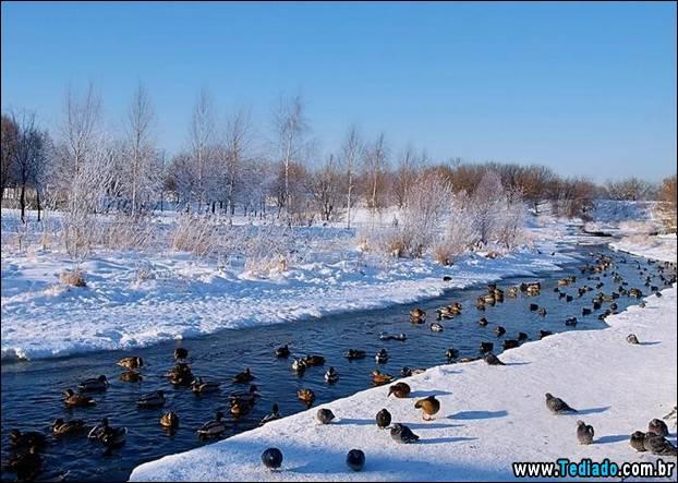 fotos-impressionantes-da-natureza-do-inverno-05