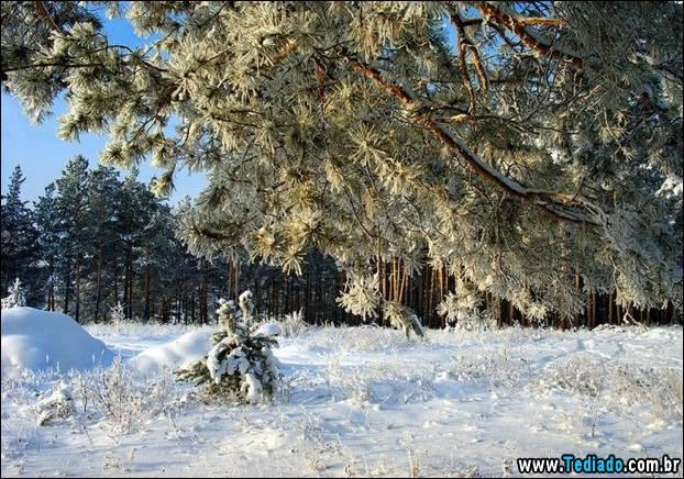 fotos-impressionantes-da-natureza-do-inverno-07