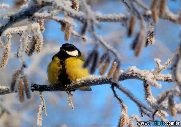 fotos-impressionantes-da-natureza-do-inverno-10