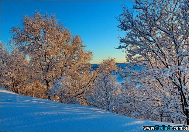 fotos-impressionantes-da-natureza-do-inverno-19