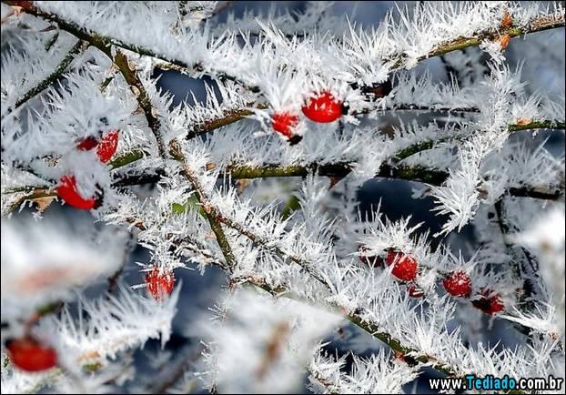 fotos-impressionantes-da-natureza-do-inverno-21