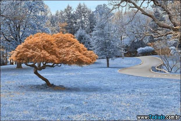 fotos-impressionantes-da-natureza-do-inverno-25