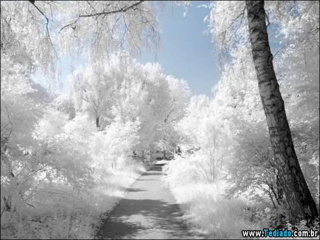 fotos-impressionantes-da-natureza-do-inverno-27
