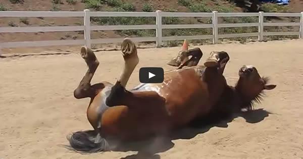 Já viu um cavalo peidar 2