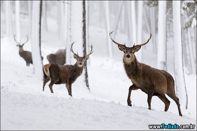 melhores-imagens-de-animais-11