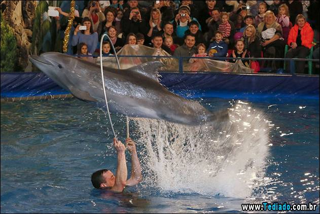 Atlantic Bottlenose dolphin performs tricks with its trainer during a New Year's Dolphin Show in Russia's Siberian city of Krasnoyarsk