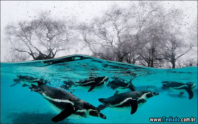 APTOPIX Britain Zoo Count