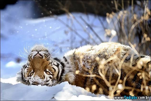 ZOO SNOW