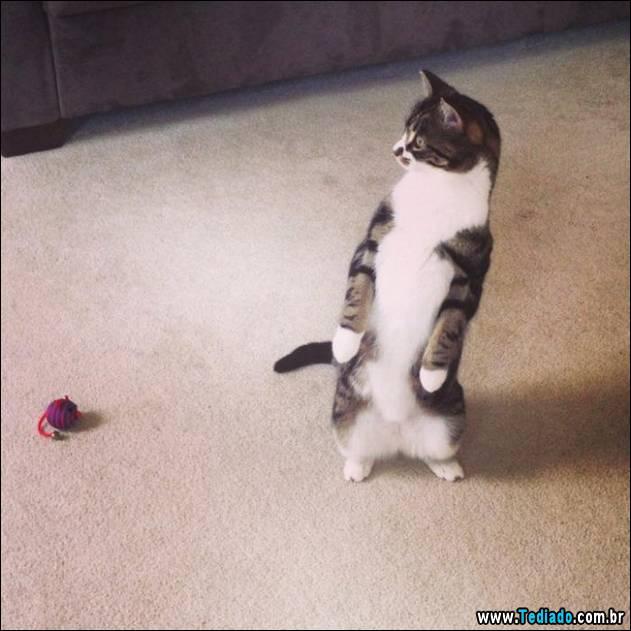gatos-engracados-que-gostam-de-sentar-01