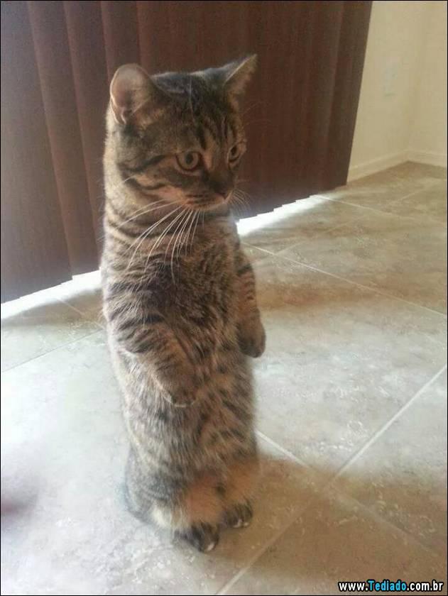 gatos-engracados-que-gostam-de-sentar-03