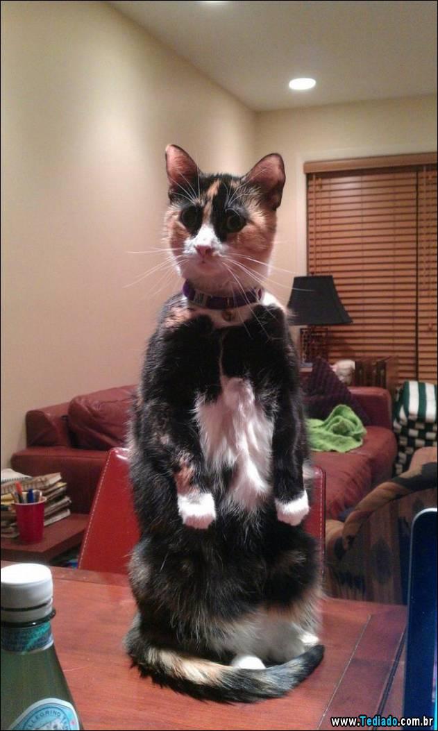 gatos-engracados-que-gostam-de-sentar-04