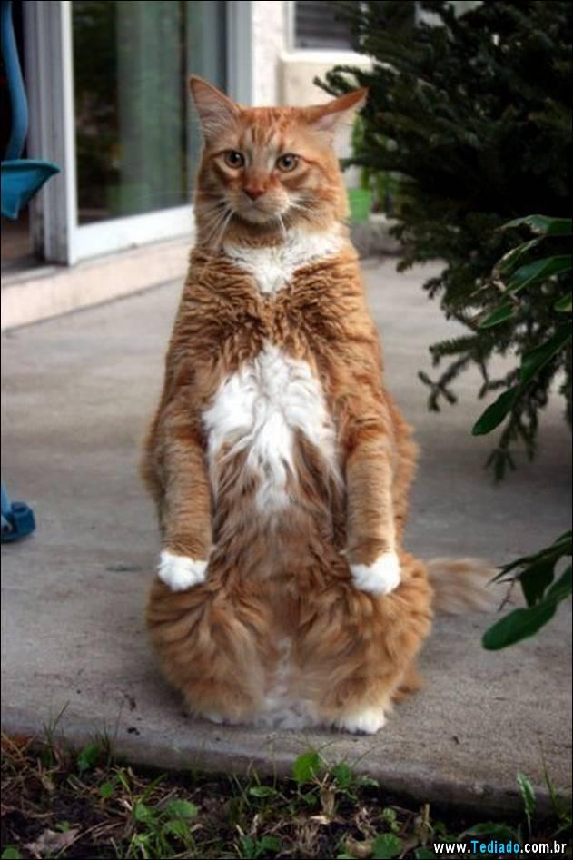 gatos-engracados-que-gostam-de-sentar-05