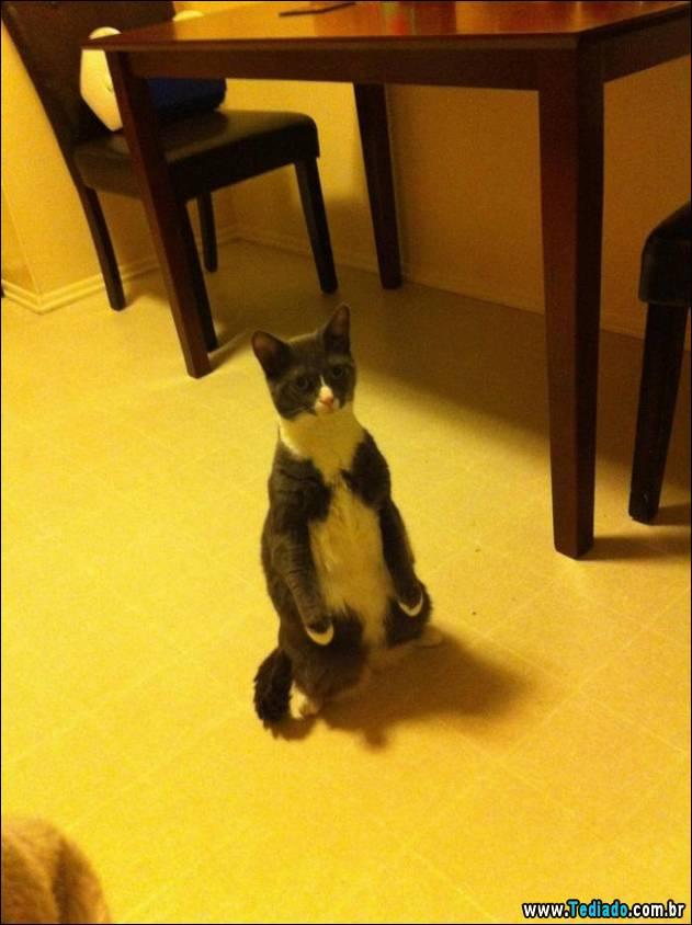 gatos-engracados-que-gostam-de-sentar-06