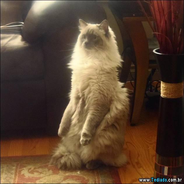 gatos-engracados-que-gostam-de-sentar-07