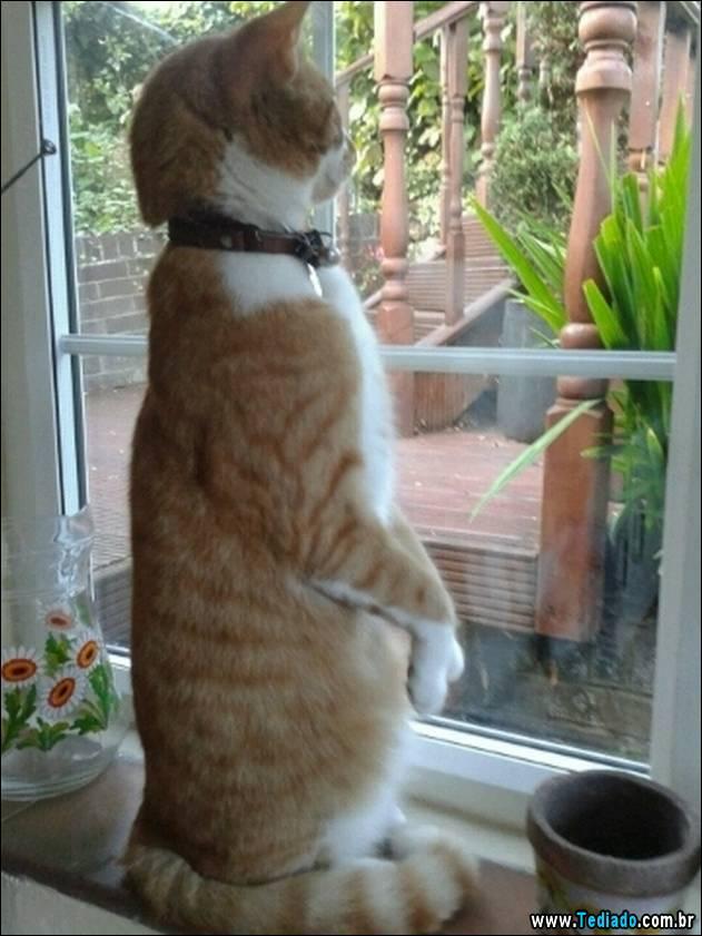 gatos-engracados-que-gostam-de-sentar-08