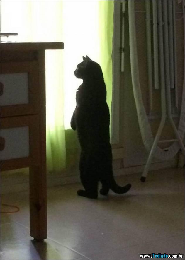 gatos-engracados-que-gostam-de-sentar-09