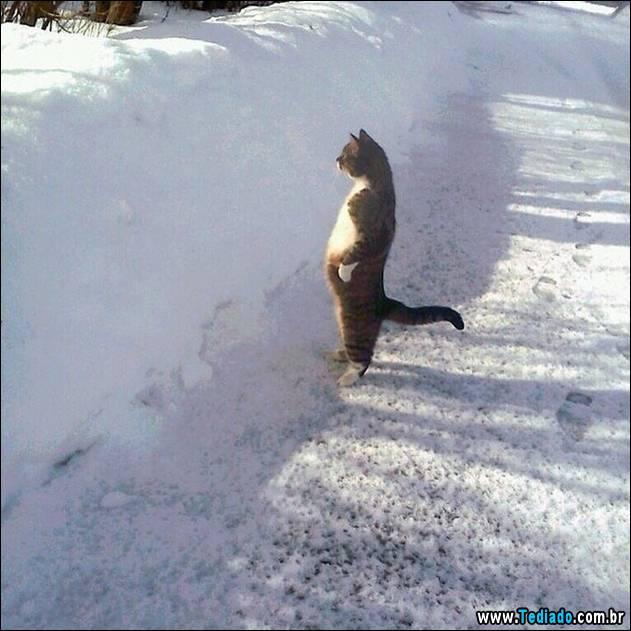 gatos-engracados-que-gostam-de-sentar-12