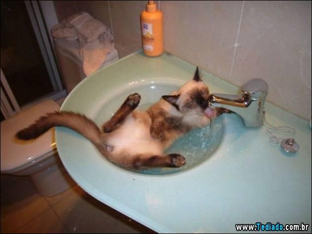 gatos-que-nao-tem-medo-de-agua-03