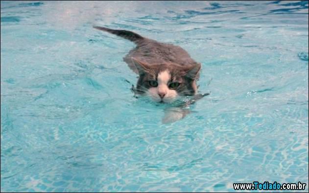 gatos-que-nao-tem-medo-de-agua-07