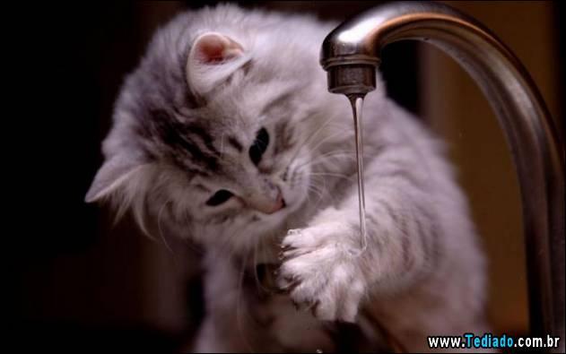 gatos-que-nao-tem-medo-de-agua-08